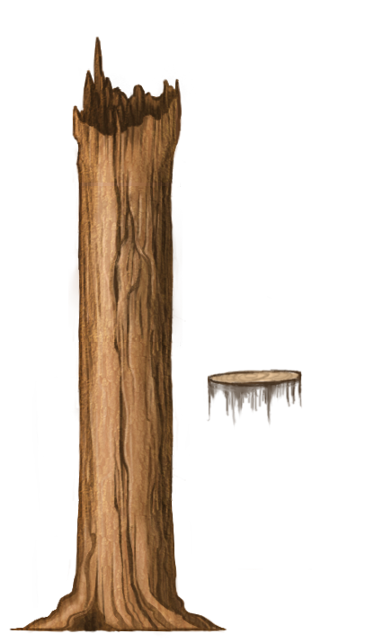 Tree tall and stump.png
