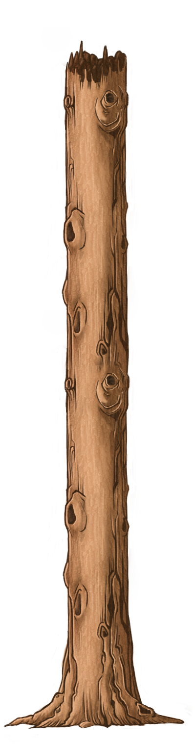 Trunk 2.png